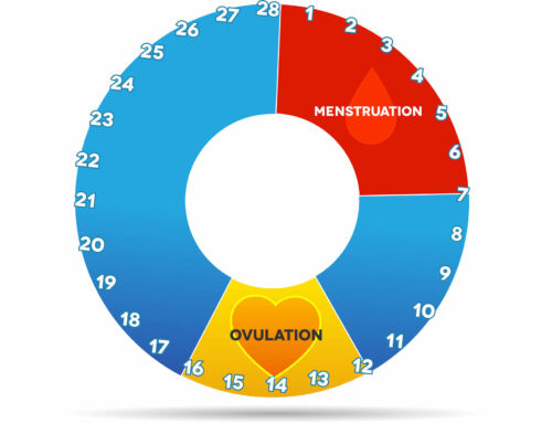 Ovulation, what you need to know